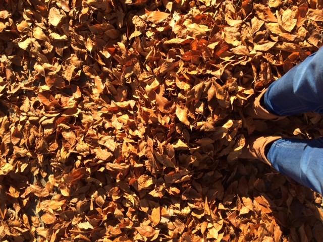 herfst uilen maken van bladeren