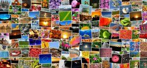 Hoe gebruik je afbeeldingen en pins met auteursrecht op de juiste wijze?; cco creative commons; embedden en citeren